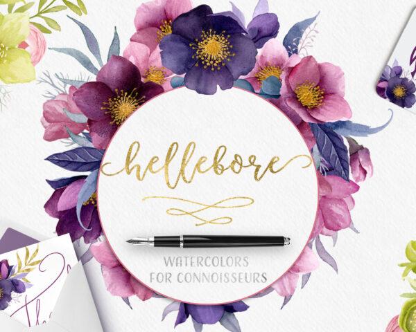 Hellebore watercolor collection