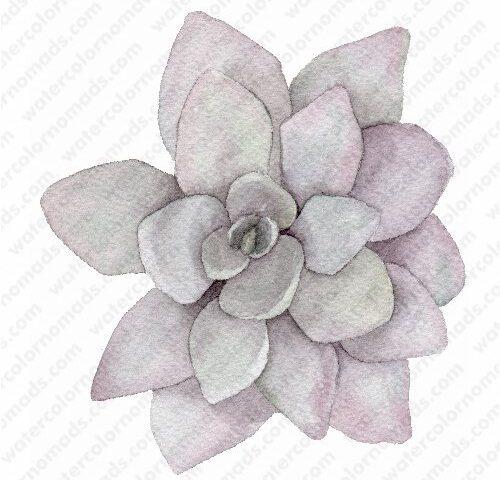 succulent Fantasia Watercolor