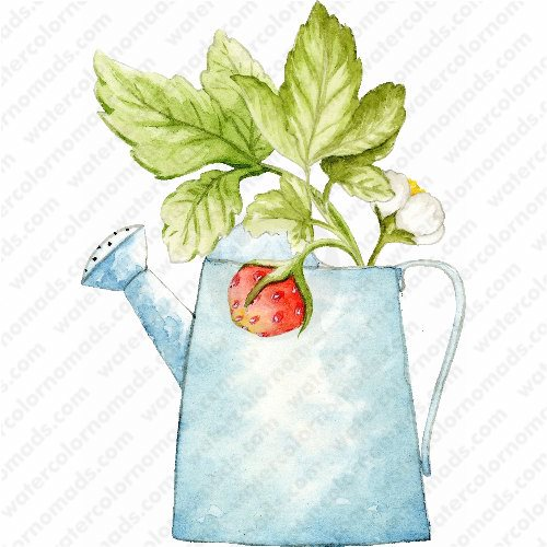 watering-can_strawberry